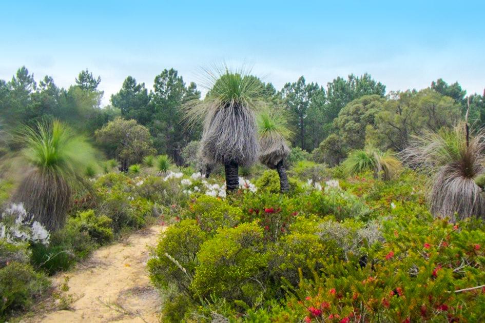 Yanchep Trails | acu cap blog trails 1
